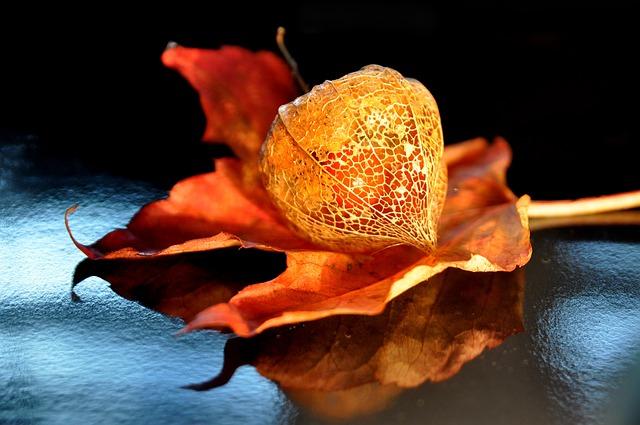 autumn-1713232_640